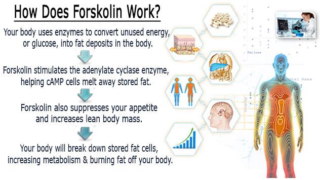 forskolin health uses